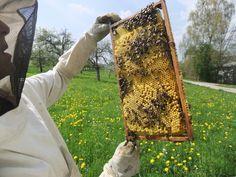 Direkt aus der Natur, die Bienen Kosmetik