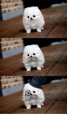 so adorable!!!