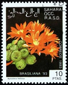 SAHARA - CIRCA a stamp printed in Sahrawi Arab Democratic Republic shows Aylostera Heliosa Cactus, World Stamp Exhibition Brasiliana circa 1993 photo Cactus, Valley Of Flowers, Postage Stamp Art, Stamp Printing, You Are The World, Flower Stamp, Cover Art, Orchids, Mailbox