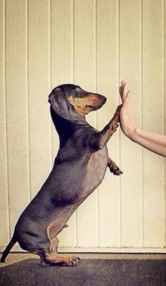 ❤️ Great high five. doxie