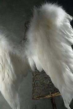 White Feather Angel Wings 22 x 20 Goose & Marabou