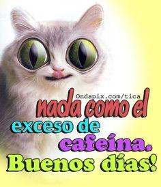 Exceso de cafeina #buenos días #animales #gatos
