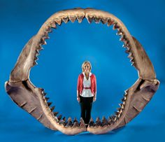 World's largest Megalodon jaw... www.staged.com/act/spzkaz http://shareyt.com/?r=2513 http://paradoxcash.com/?cash=4783