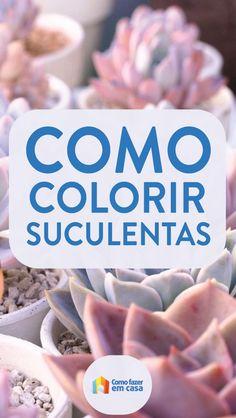 Como deixar as suculentas coloridas