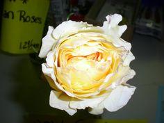 David Austin Garden Rose Beatrice David Austin, Cut Flowers, Garden Roses, Plants, Plant, Roses Garden, Planets