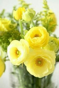 Ranunculus