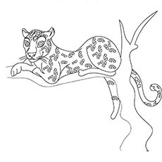 25 Best Cheetah Coloring Pages For Your Little Ones In 2020 Coloring Pages Color Animals Wild