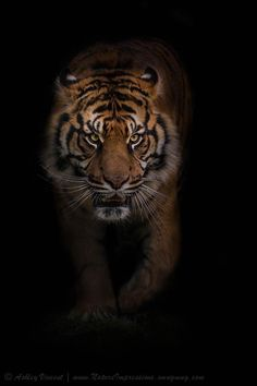 Purposeful Strides by Ashley Vincent