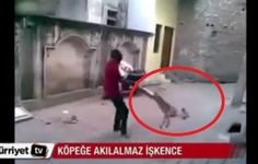 Prosecute Man For Spinning A Dog In The Air And Slamming Him To The Ground!   PetitionHub.org
