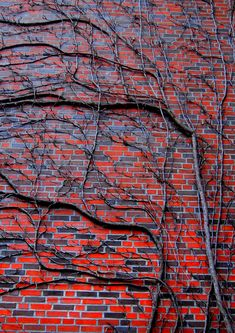 red and blue bricks