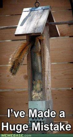 Squirrel - oh nuts