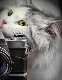 Oh, are we taking pictures? Pick me, pick me. Cat and camera by 2b4guitars