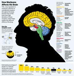 How Marijuana Affects the Brain