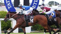Brook Road - winning the listed Travel Associates Classic at Doomben 29/11/14