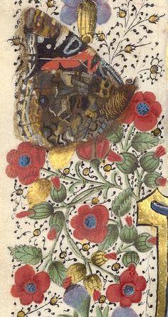 Papillon (f°43v) -- «La Fleur des histoires», de Jean Mansel, tome II, France,1454 [BNF, Arsenal Ms 5088 réserve - ark:/12148/btv1b55007168j]