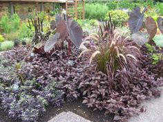 Basic Design Principles - Using Color in the Garden | Proven Winners