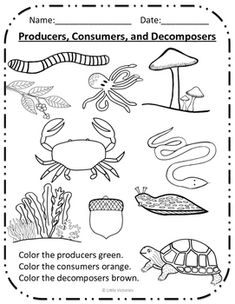 Organisms In A Food Chain Sort Cut Amp Paste Producer