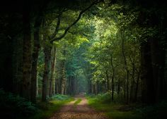 Into the green by erynlasgalenphotoart