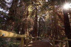 5. Carbon Canyon Regional Park Redwood Grove in Orange County