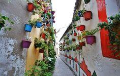 flower pots - street, wall, flowers, pots