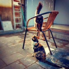 #allmylove .© Todos os direitos reservados. . . . #brasilia #boilerroom #americanhorrorstory #staatliches #kitty #cat #chat #globonews #bandnews #noracism #Vegan #bauhaus #gopro #dubsmash #dj #coffeebreak #kush #bobmarley #design #fitness #architecture #igdaily #cinema