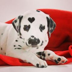 Heart-shaped spot on forehead. So cute!