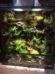 New Free Reptile Terrarium chameleons Thoughts There is no doubt that which has a family pet would bring untold delight to another person's life. Tree Frog Terrarium, Gecko Terrarium, Aquarium Terrarium, Terrarium Plants, Chameleon Terrarium, Reptile House, Reptile Habitat, Reptile Cage, Reptile Enclosure