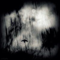 La sombra #hacereshacerse. January feeling by lostknightkg