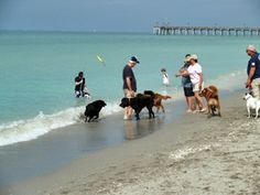 Brohard Beach is one of Florida's best dog friendly beaches, located south of Venice Beach, Florida