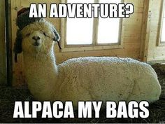 Alpaca my bags. Haha found this really funny for some reason Bad Puns, Funny Puns, Funny Stuff, Funny Things, That's Hilarious, Funny Work, Random Things, Random Stuff, Animals