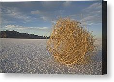 Tumbleweed On The Bonneville Salt by John Burcham - Tumbleweed On The Bonneville Salt Photograph - Tumbleweed On The Bonneville Salt Fine Ar...