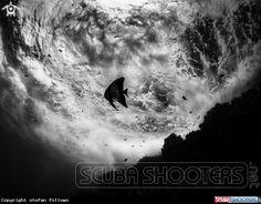 Longfin Batfish  in Sail Rock - Thailand