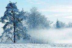 Winter morning in Latvia