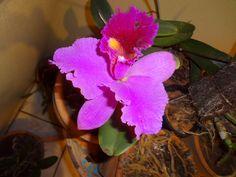 My lovely flower