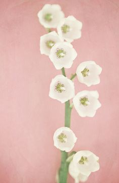White Lily of the Valley on Pastel Pink - Pretty flower art for your iPhone  by Lisa Russo