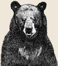 Black Bear Art  - Great Big Bear Illustration. $20.00, via Etsy.