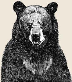 Black Bear Art  - Great Big Bear Illustration. $20.00, via Etsy.