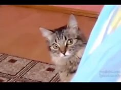 25 Animals Who Are The Sneakiest Little Sneaky-Sneaks You've Ever Seen - World's largest collection of cat memes and other animals Animals And Pets, Funny Animals, Cute Animals, Funny Animal Videos, Animal Memes, Cute Cats, Funny Cats, Cat Behavior, Tier Fotos