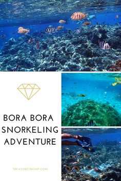Bora Bora Snorkeling Adventure