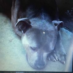 **RESCUE, FUREVER HOME OR FOSTER NEEDED!** Heartbreaking cries from young dog as her life falls apart in city shelter