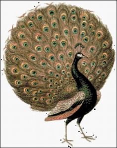 Peacock Cross Stitch Printable Needlework Pattern - DIY Crossstitch Chart, Relaxing Hobby, Instant Download PDF Design