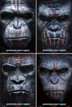 Dawn Of The Planet Of The Apes HD Wallpaper THIS Wallpaper