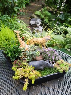 Using small plants to make a miniature landscape fires the imagination and reduces the garden to a child's scale. Plastic farm or jungle animals, fairies, or dinosaurs bring the scene to life. Follow these steps from HGTV Gardens to create a miniature landscape.
