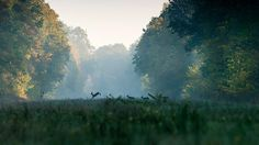 conflictingheart: seaembraces: Deer in Snagov Forest, Romania, by Sorin Onișor Indigo Eyes, Wild Nature, Natural World, Faeries, Beautiful Creatures, Wilderness, Cool Photos, Amazing Photos, The Great Outdoors