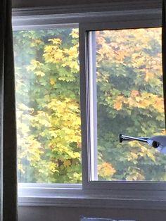 Windows, Home, Ad Home, Homes, House, Window, Ramen