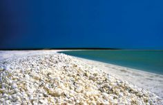 """""""amazing-unusual-beaches"""" Shell Beach, Shark Bay, Australia~  The water near Shell Beach in Australia is so saline that the cockle clam has been able to proliferate unchecked by its natural predators. It is this abundance of molluscs that floods the beaches with their shells. Image credits: australiascoralcoast.com"""