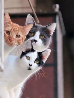 """""""Pure Beings"""" — .. ..looking at our new neighbors…❤❤"""