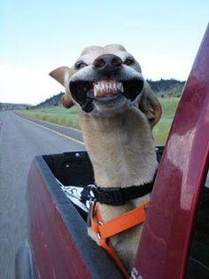 life style: Dog Vs. Wind