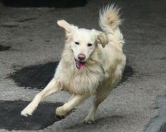There are lots of ways you can incorporate exercising with your dog, so here are eight to get you started.