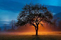 The original tree lamp